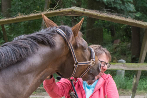 Probleme mit dem Pferd , was tun?